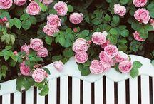landscaping    gardening / dreams about garden