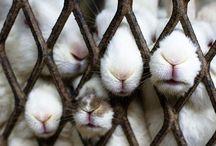 animal planet / wildlife & bunnies