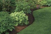 Home Decor & Gardening Tips / by Judy Wilson
