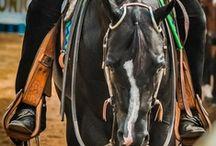 ____Saddles and Stuff