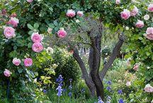Garden / Ideas for the garden