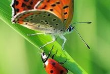 Butterflies and Ladybugs!!! / colors beauty shapes nature
