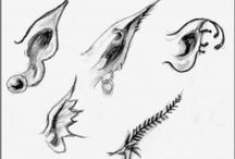GCSE: fantastic and Strange- Mystical creatures