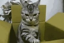 GIFs / Moving pictures of funny cute and many more types of things.