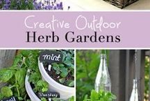 Herbs / How to grow and use Herbs