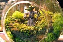 Terrariums, Miniature & Fairy Gardens