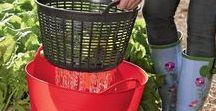 Tips and Garden Hacks