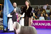 """Ольга Климова / Interview with WDS 2015 winner and Eukanuba World Challenge 2015 participant  - Olga Klimova, owner of the Bearded Collie Ops I Did It Again Del Cuore Impavido """"Rony"""""""