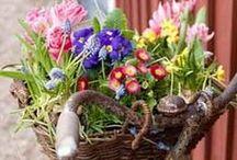 Flores / by Bazar 185 - Premium Outlet - Online