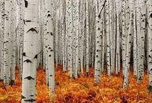 L'automne / Fall / L'automne / Fall