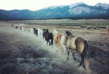Horses // Quotes