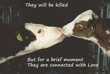 Animal Cruelty // Awareness