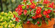Flores de otoño-invierno / Plantas perennes que florecen (casi) todo el año.