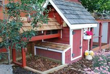 The Hen House / by Jenny