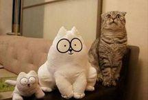 KITTIES. / CATS EVERYWHERE! / by Gloriavefe