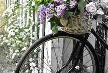 Bicycle / by Chiho Suzuki