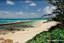 Maui Best Beaches / We ask our readers to pick the best Maui beaches every year. Tune in and cast your vote - what is your favorite Maui beach and why?