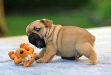 Soo cutiee