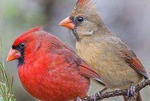 Birdies ❤️