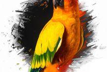 Maverick parrots