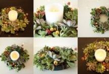Our Fleurieu Plant Gifts / Plant gifts are sustainable, long lasting and beautiful!