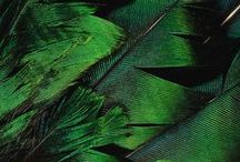 Colours: Greens / Colour inspiration