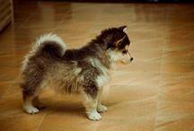 Puppies :)  / by Robyn Siner