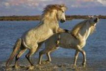 Horses & Ponies I / by Carmen Williams