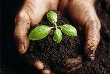 Yard & Garden II / ...info, good & bad bugs, selected gardens, plants, & more / by Carmen Williams