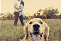 Engagment/Wedding Photo Ideas / by Brittany Leigh