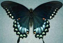 Butterflies & Moths / by Carmen Williams