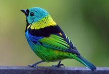 Birds II / by Carmen Williams