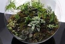 Terrariums & Fairy & Miniature Gardens / ...pictures, tips, & tutorials / by Carmen Williams
