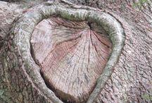 Llama Loves Wood