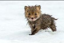 Furry Cuteness / by Rachel Hinson