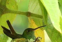 I love nature  / by Jill Kelley