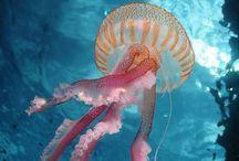 JF. / • Jellyfish •
