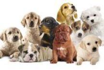 """We love PET / Amiamo i nostri amici a 4 zampe!  Per loro abbiamo studiato una gamma di prodotti EcoBiologici: la linea specifica e innovativa """"The Bio Love Pet"""". www.bemacosmetici.it/pet.html"""