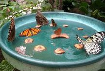 Butterflys & Bees, Oh My! / From butterfly gardens to beekeeping; your hobbies become our hobbies as we bring your vision to life.
