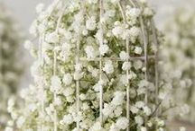 Baby's Breath / Elegant and Soft Baby's Breath Reception