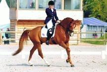 Riding & Alexander Technique