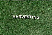 Production & Harvesting