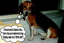 DogShaming