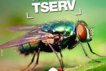 .´.MOSCAS - TSERV FRANQUIA.´. / SAIBA COMO CONTROLAR AS MOSCAS Venha ser nosso franqueado. www.dedetizadoratserv.com.br