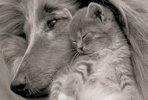 CAT ♥ DOG