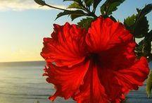 Flower Power / by Denise Lynne