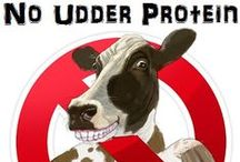 No Udder Protein Recipes