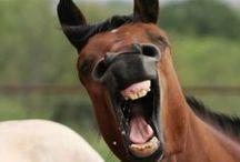 Paarden   Humor