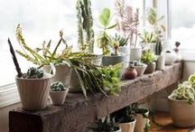 Let's Plant it! / Indoor and outdoor plants