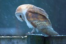 Owls / by Chole Boyett